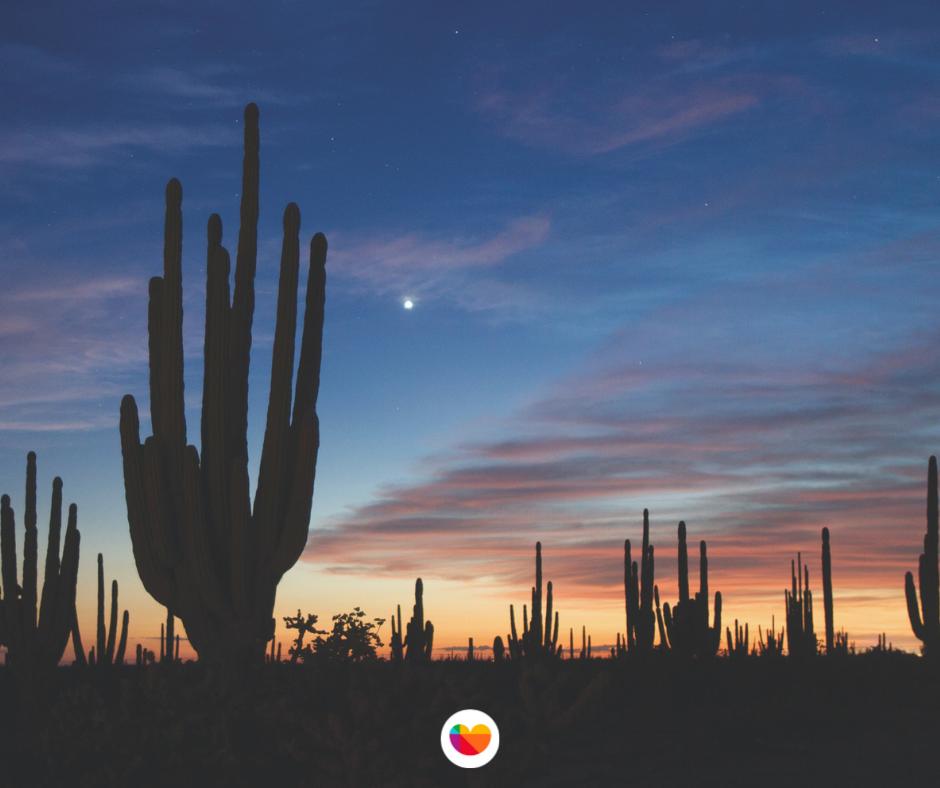 Bosque de Sahuaros en el desierto de Sonora.