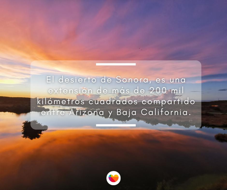 El desierto de Sonora es una extensión de más de 200 mil kilómetros cuadrados.